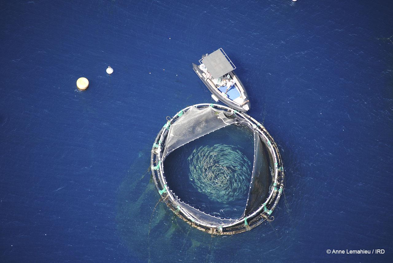 Aquaculture, île de la Réunion, 2015