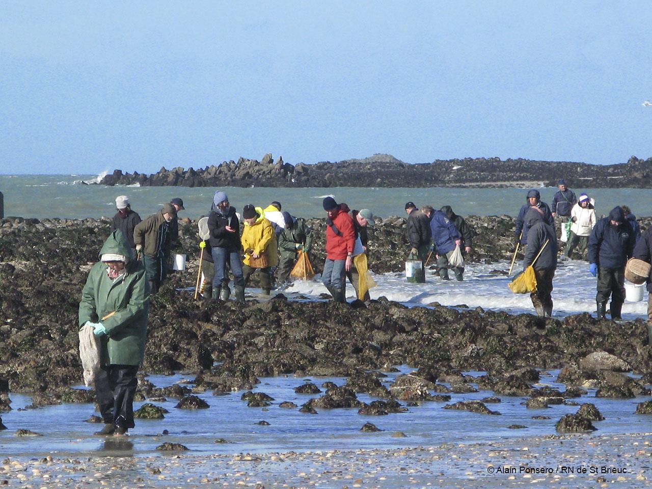 Pêche à pieds, baie de Saint-Brieuc, Côtes d'Armor , 2009